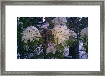 Framed Print featuring the photograph Spiny Snow Balls by Chris Tarpening