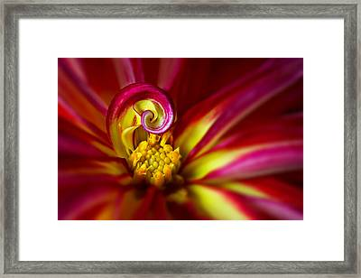 Spiral Framed Print by Mary Jo Allen