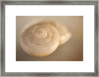 Spiral Shell 2 Framed Print