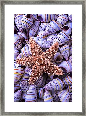 Spiral Shells And Starfish Framed Print by Garry Gay