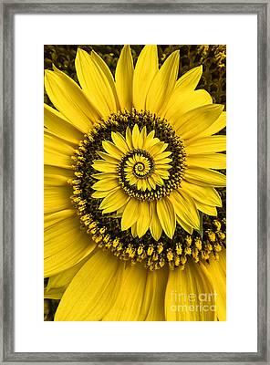 Spiral Sunflower Framed Print