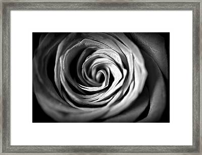 Spiraling Rose Framed Print by Christine Ricker Brandt