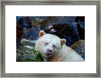 Spirit Bear Portrait Framed Print by Melody Watson