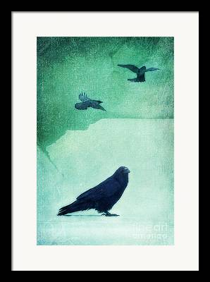 Spritibird Framed Prints