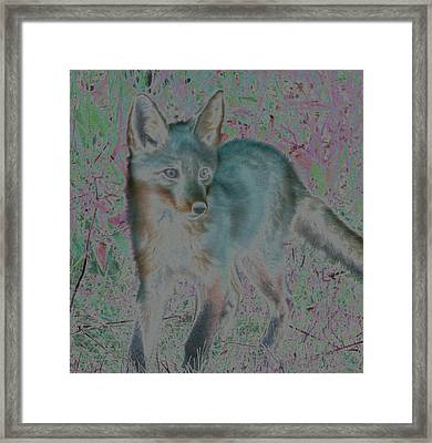 Framed Print featuring the photograph Spirit Fox by Aurora Levins Morales