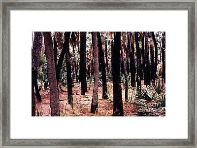 Spirit In The Trees Framed Print by Steven Valkenberg