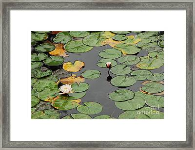 Spirit Lake Lillies Framed Print