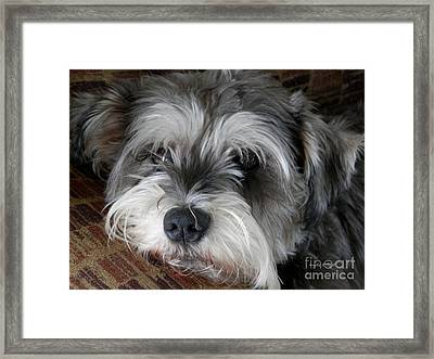 Spirit Missing Lisa -sparke Framed Print by Angelia Hodges Clay