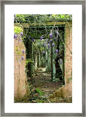 Spirit Of Elmwood Framed Print