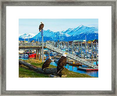 Spirit Of Homer Spit Boat Harbor Framed Print by Debra  Miller