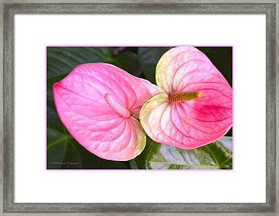 Spirit Of Love Framed Print by Sonali Gangane