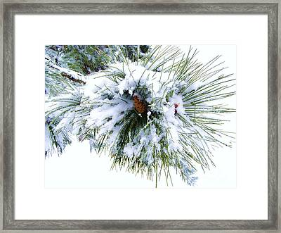 Framed Print featuring the photograph Spirit Of Pine by Margie Amberge