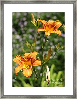Spirit Of Summer Framed Print by Luke Moore