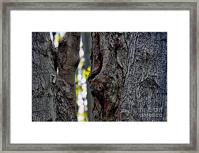 Spirit Of The Forest Framed Print by Andrea Kollo