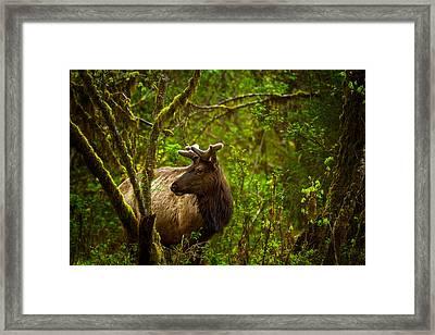 Spirit Of The Forest Framed Print by Stuart Deacon