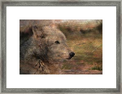 Spirit Of The Wolf Framed Print by Deena Stoddard