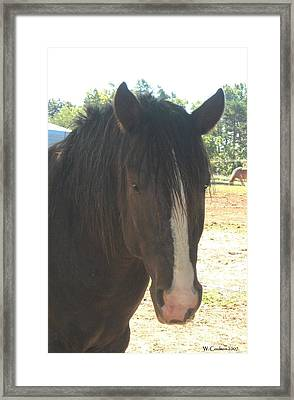 Spirit Framed Print by Wendy Coulson