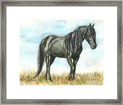 Spirit Wild Horse In Sanctuary Framed Print