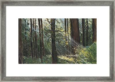 Spirit Woods Framed Print