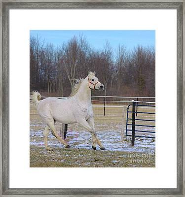 Spirited Horse Framed Print by Kathleen Struckle