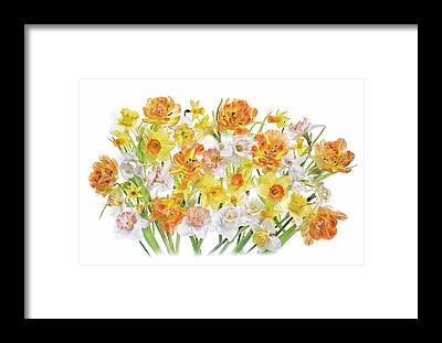 Daffodils Framed Prints