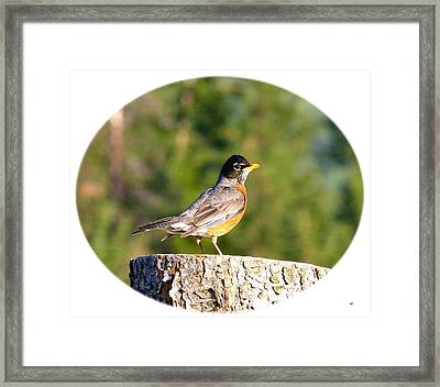 Spirited Robin Framed Print