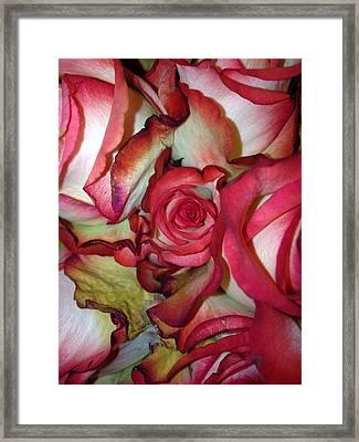 Spirited Rose  Framed Print
