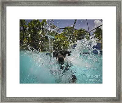Splash Down Framed Print