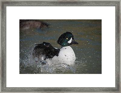 Splash Down Framed Print