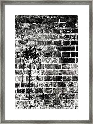 Splash Graffiti Framed Print by Quirky Jen Photos