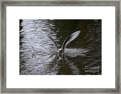 Splash Landing Framed Print by Erica Hanel