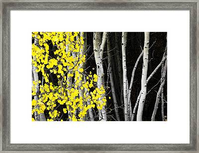 Splash Of Gold Framed Print by The Forests Edge Photography - Diane Sandoval