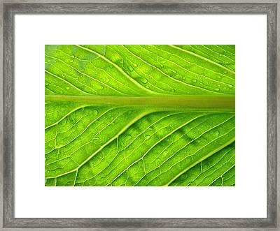Splash Of Green Framed Print