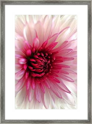 Splash Of Pink Framed Print by Deb Halloran