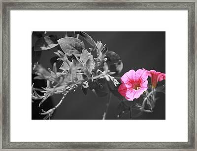 Splash Of Pink Framed Print by Kimberly Elliott