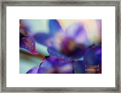 Splash Framed Print by Sue OConnor