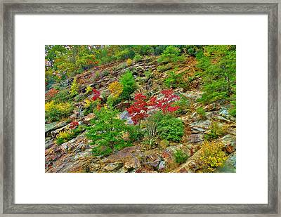 Splashes Of Fall Framed Print