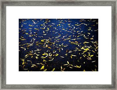 Splashes Of Sun Framed Print by Alexander Senin