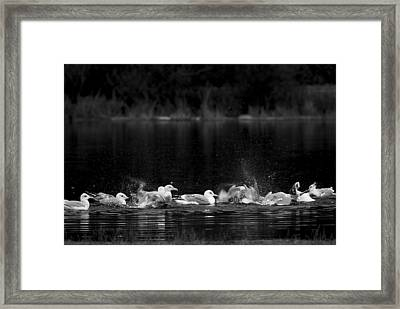 Framed Print featuring the photograph Splashing Seagulls by Yulia Kazansky