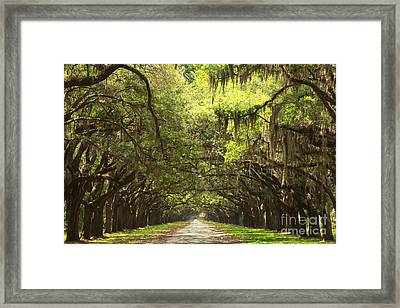 Splendid Oak Drive Framed Print