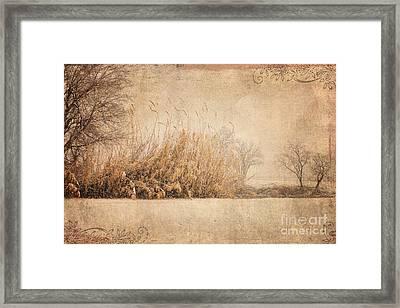 Splendor Framed Print by Betty LaRue