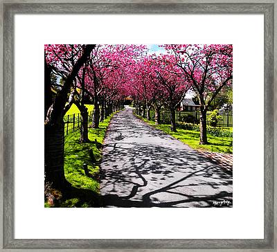 Splendour 2 Framed Print