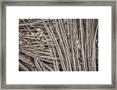 Splinters Framed Print by Scott Norris