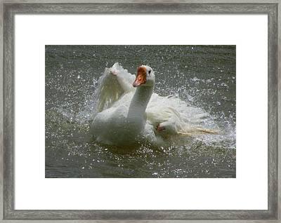 Splish Splash 1 Framed Print by Carol Hoffman