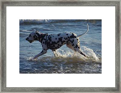 Splish Splash Framed Print by Blair Stuart