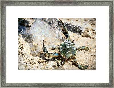 Splish Splash Framed Print by Sennie Pierson