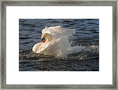 Splish Splash Taking A Bath Framed Print by Jlt Photography