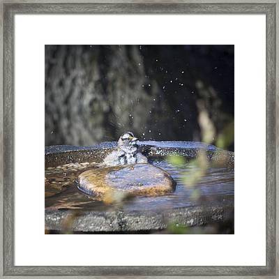 Splish Splash Framed Print by Teresa Mucha
