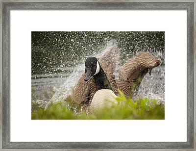 Splishing And Splashing Framed Print