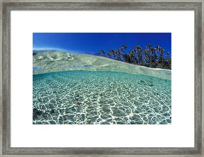 Split Level Palms Framed Print by Sean Davey